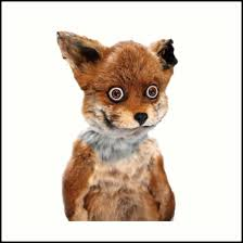 Taxidermy Fox Meme - geoff stoned fox taxidermy meme adele morse art prints by adele