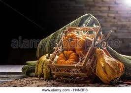 Mini Decorative Pumpkins Mini Pumpkins In A Wooden Crate Stock Photo Royalty Free Image