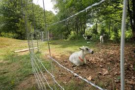 escape of the invasives top six invasive plant species in the invasive species got your goat so does kennebunk woman u0027s new