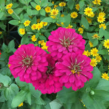 Flower Seeds Online - the seed collection buy herb flower and vegetable seeds online