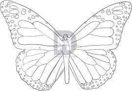 how to draw a butterfly by drawing guide by
