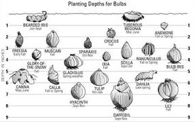 bulb growing tips east bay nursery