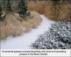 ornamental grasses for winter