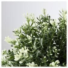 Plante Artificielle Exterieur Ikea fejka plante artificielle en pot ikea