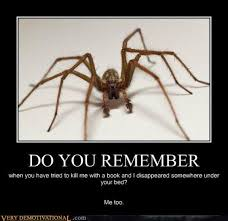I Tried Killing A Spider - 30 best killing bugs spiders and roaches images on pinterest