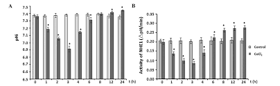 time dependent activity of na h exchanger isoform 1 and