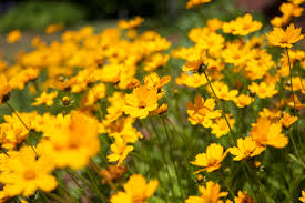 Flower Pictures Free Sample Request Next To Nature