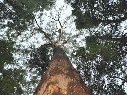 bird tree and benaroon kendall attraction