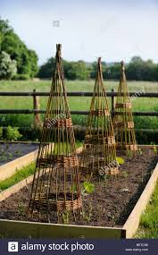 willow climbers in a vegetable garden suitable for beans or sweet