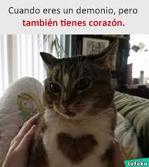 Gato Meme - llego el gato meme subido por patotroll memedroid