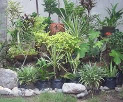 amusing small rock garden ideas photograph plants at t4000 x 2664