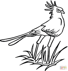 secretary bird coloring page free printable coloring pages