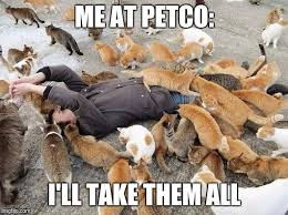 Crazy Dog Lady Meme - i almost came home with two new cats yesterday but i barely have