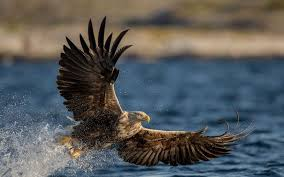 strange eagle wallpapers eagle wallpaper hd eagle images u0026 eagles hd wallpapers