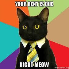 Rent Meme - your rent is due right meow business cat make a meme