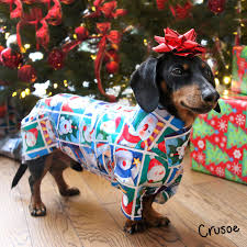 dachshund wrapping paper puppy dachshund wrapped in wrapping paper dachshunds