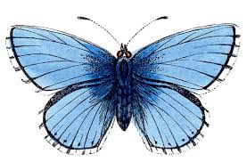 clip art natural history butterflies the graphics fairy