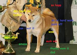 Top Doge Memes - best doge doge know your meme