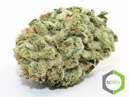 wedding cake genetics pharmoc 949 606 4056 orange county marijuana