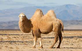different adaptations of desert animals tatooine desert