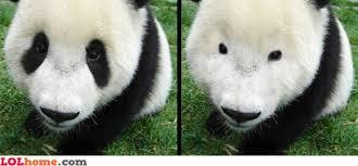 Panda Meme Mascara - panda without eye spots