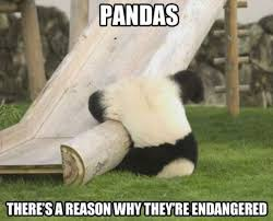 Silly Meme - funny silly panda meme and lol