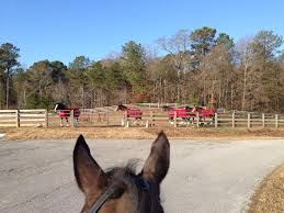 Budweiser Clydesdale Barn Budweiser Clydesdales Move Into Poplar Place Farm Eventing