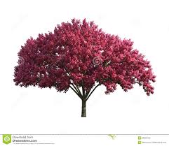 purple tree isolated on a white background stock photography