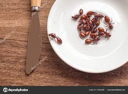 de fourmis dans la cuisine rôti de fourmis subterranean est propre nourriture dans la cuisine