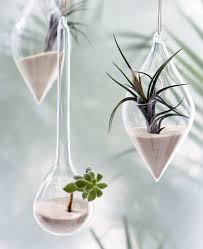 air plants home decoration inspiration ideas and gifts