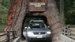 Chandelier Drive Through Tree California U0027s Iconic U0027drive Thru U0027 Tree Succumbs To Storm Youtube