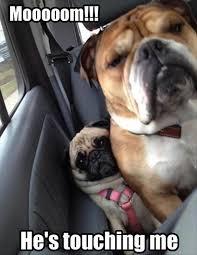 Puppy Face Meme - lol awww the pug s face looks so worried the bull dog s face is