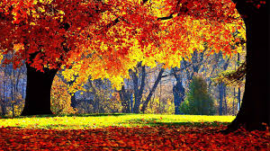 trees autumn fall season landscape forest tree color nature hd
