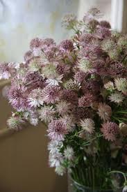 8 best pedestals and urns images on pinterest floral