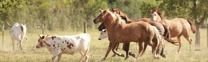 Black Mustang Ranch Pilot Point Texas Things To Do In North Texas Slye Ranch