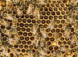 one scientist u0027s crazy bet to save the bees join monsanto wired