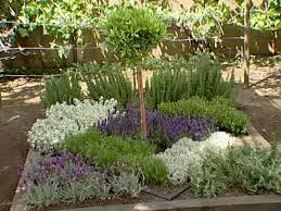 herbal garden how to make an herbal knot garden how tos diy