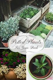 potted plants keep your deck colorful and festive life with lorelai