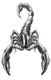 temporary scorpion and rose tattoo design photos pictures and