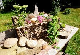 den steingarten bepflanzen steingartenpflanzen im überblick