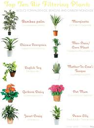 light and plant growth best indoor plants low light best indoor plants gem low light grow