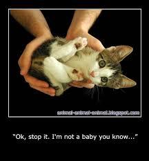 Baby Animal Memes - animal animal animal february 2012