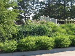 landscaping with australian native plants native plant landscaping ideas backyard fence ideas