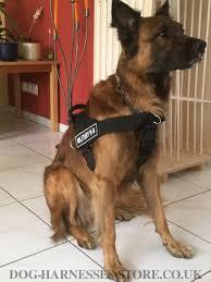 belgian sheepdog for sale uk tervuren harness nylon for work and sport 34 65