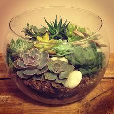 resume modernos terrarios suculentas bonito terrario con cactus piedras y sustrato decoración