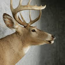 100 taxidermy shop floor plans shovel caribou taxidermy taxidermy shop floor plans 11 taxidermy shop floor plans sports man cave sign awesome man