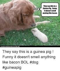 Funny Pig Memes - 25 best memes about pig funny pig funny memes