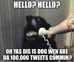 Yas Meme - yes this is dog memes imgflip