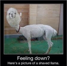 Funny Feel Good Memes - i hope you feel better imglulz
