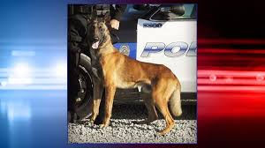 belgian shepherd las vegas calif k 9 officer dies in car after air conditioning fails 6abc com
